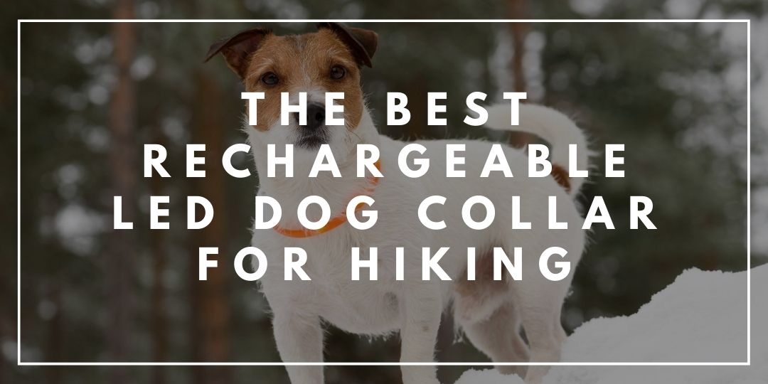 The Best Rechargeable LED Dog Collar For Hiking