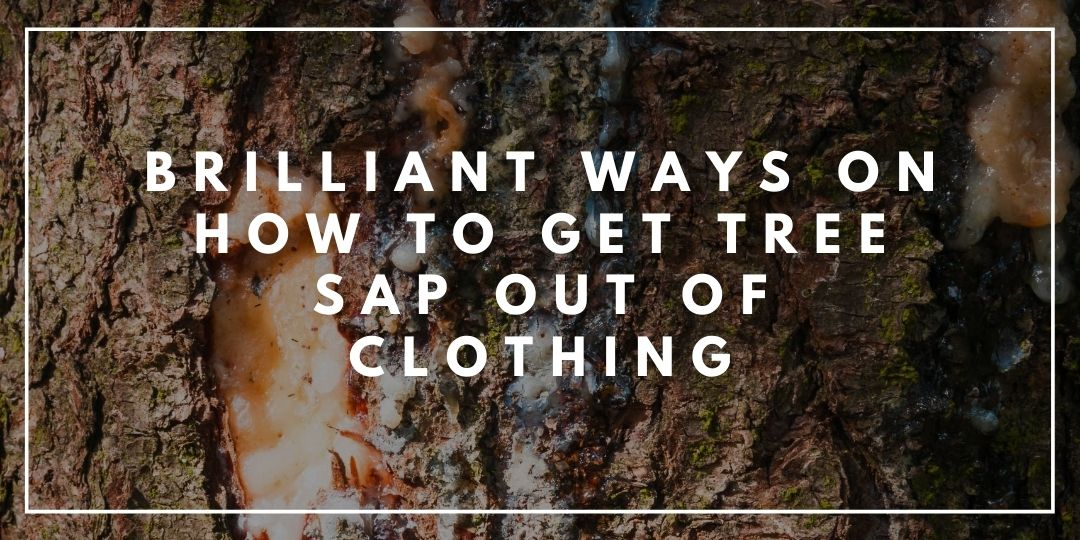 Brilliant Ways on How to Get Tree Sap Out of Clothing